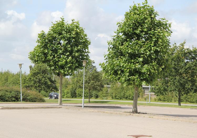 Ledige kontorer i Marslev, Rynkeby og Langeskov